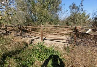 Finca rústica en Poble Nou del Delta-Eucaliptus