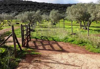 Finca rústica en Olivenza