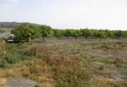 Land in calle La Bota, Parcela 172, Poligono 18