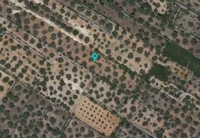 Terreny a Sant Mateu