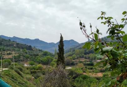 Finca rústica en Camino Paraje Las Albercas, nº Sn